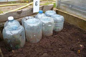 Накройте растение пластиковыми бутылками