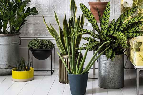 6️⃣ комнатных растений, которые очищают воздух🌱