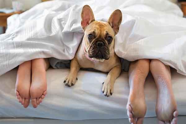 Можно ли спать с собакой в одной постели ? Вот 5 доказательств того, что нужно!