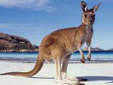10 самых опасных животных в Австралии, животные, Австралия