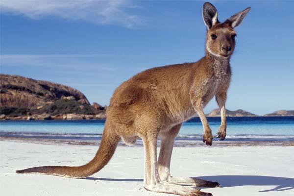 Путешествие в Австралию: 8 самых опасных животных в Австралии