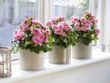 Как выбрать цветочный горшок для вашего растения?