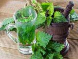 Чай из крапивы - бесценный источник здоровья