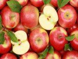 10 причин, почему вы должны есть яблоко каждый день