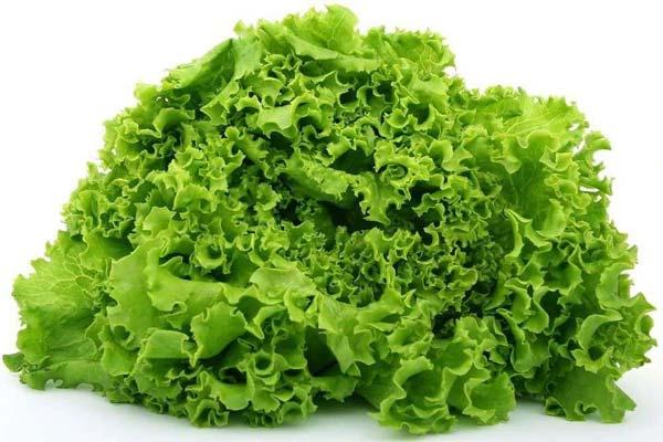 Салат Айсберг — характеристика, пищевая ценность, применение, выбор