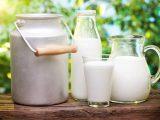 Полезно ли коровье молоко для взрослого?