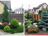 Садовые деревья и кустарники — какие лиственные и хвойные деревья и кустарники выбрать?